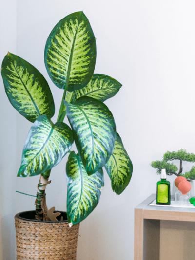Eine Zimmerpflanze mit einem Bonsai-Baum